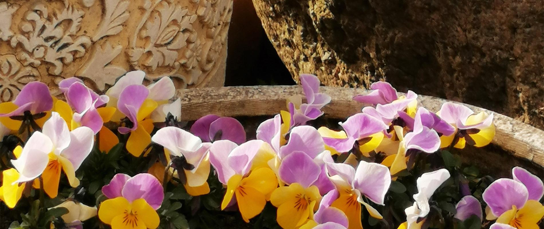 Blümen im Frühjahr