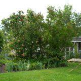 Romantischer Sommergarten der Ferienwohnung